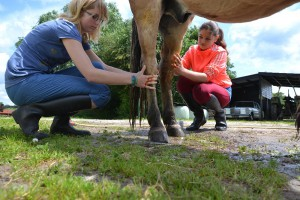 Pony wassenJournaal