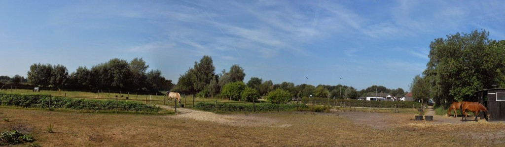 Panoramazicht weilanden