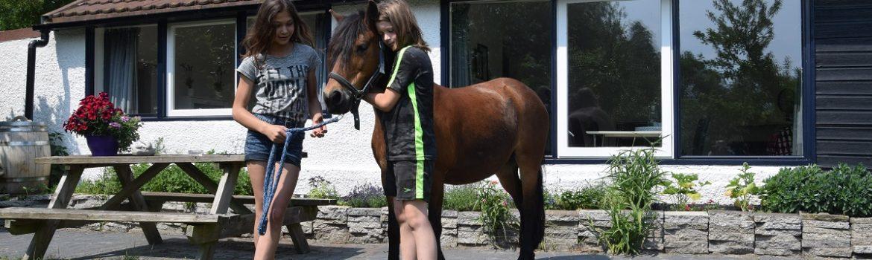 Huisje met pony