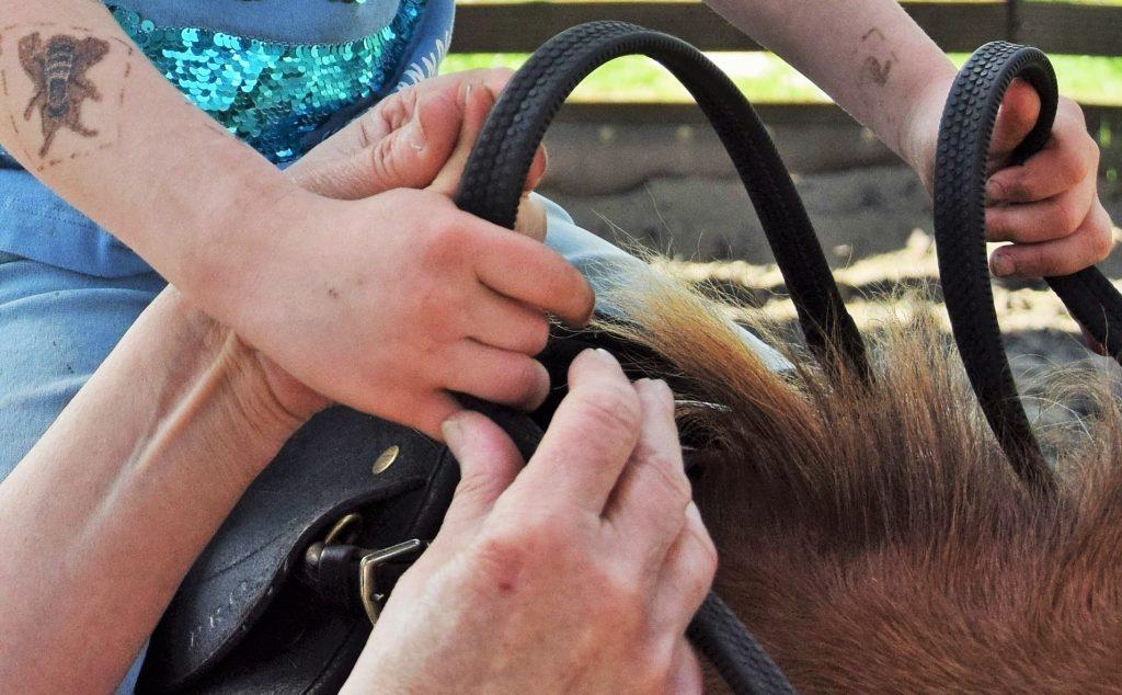 Hoe geven we les op mini-manege Hippago in Elim (Drenthe)?