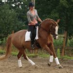 Paardrijden met plezier op mini-manege Hippago in Elim, Drenthe