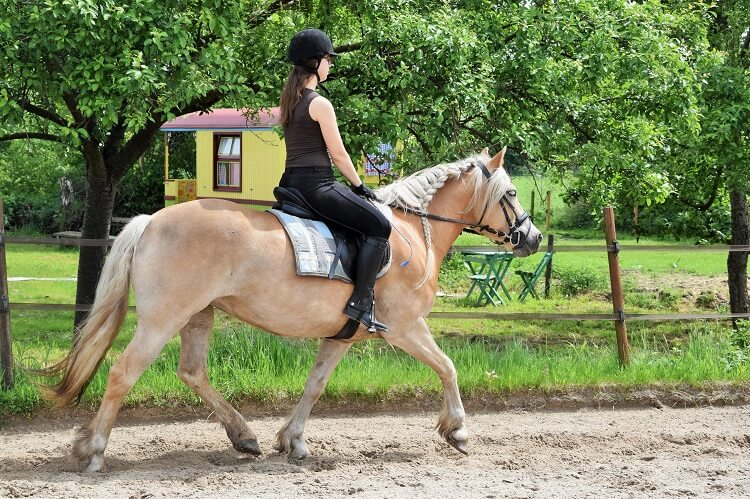 B & B en paardrijles op mini-manege Hippago in Elim, Drenthe
