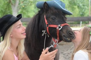 Knuffelen met Rebby (minipaardjes voor de kids op mini-manege Hippago in Elim)