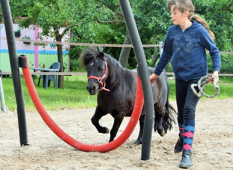Horse agility met Rebby