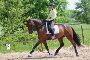 Zanou, fijn paard