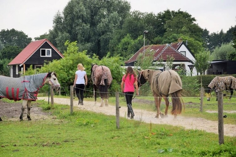 Meeloopochtend: paarden naar de wei brengen