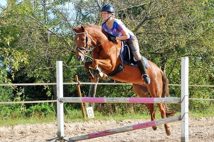 Paardrijdag: dressuur of springen?