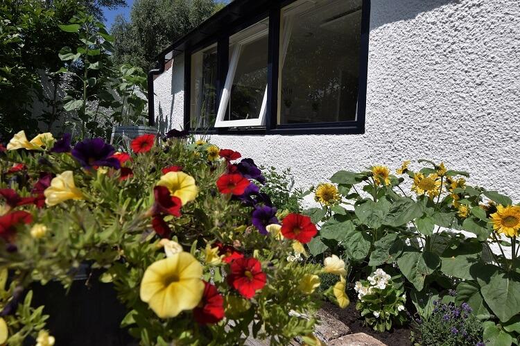 Vakantiehuisje in Drenthe bloembak